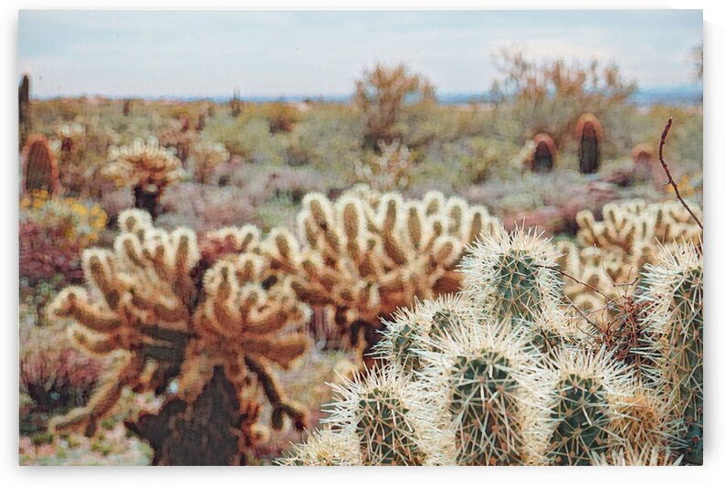 cactus bush 6 by realimpressions