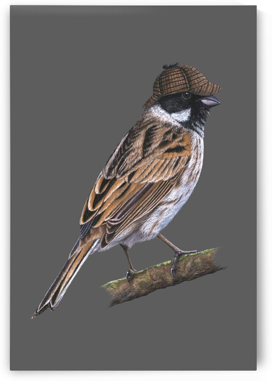 Common reed bunting by Mikhail Vedernikov