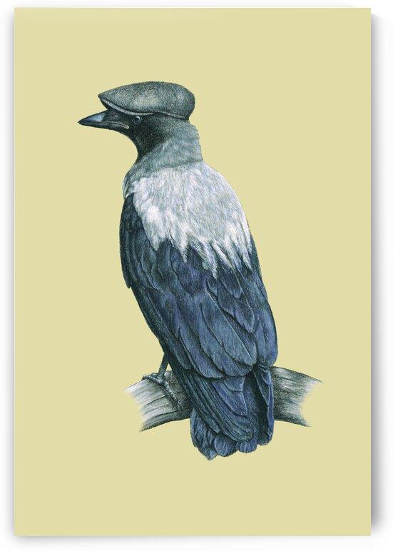 Hooded crow by Mikhail Vedernikov