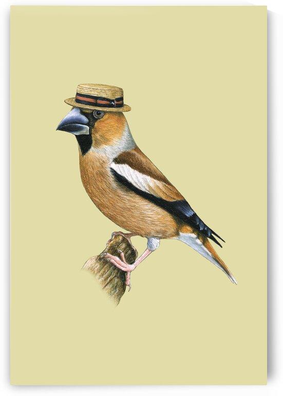 Hawfinch by Mikhail Vedernikov