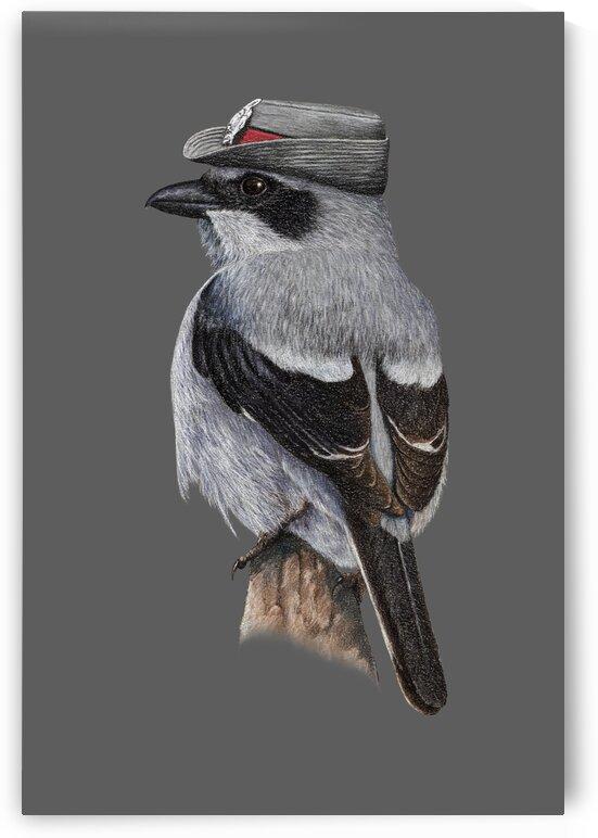 Great grey shrike by Mikhail Vedernikov