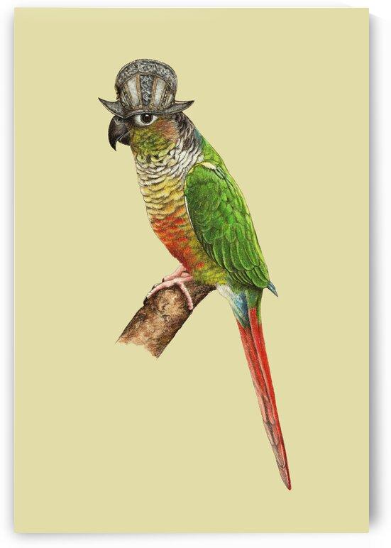 Green-cheeked parakeet by Mikhail Vedernikov