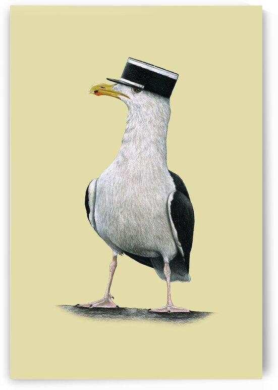 Great black-backed gull by Mikhail Vedernikov