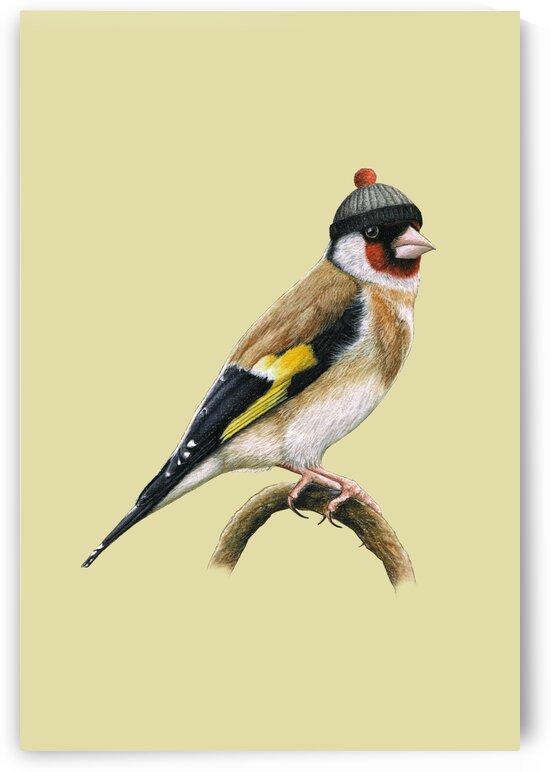 European goldfinch by Mikhail Vedernikov