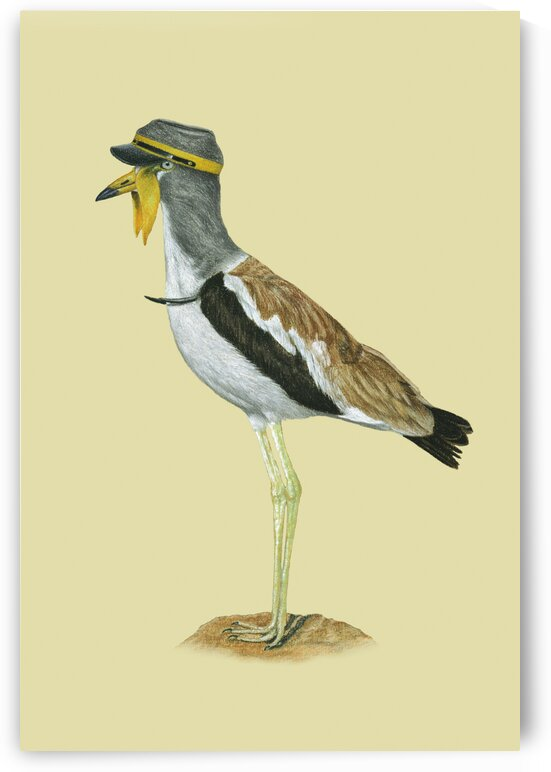 White-crowned lapwing by Mikhail Vedernikov