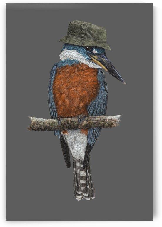 Ringed kingfisher by Mikhail Vedernikov