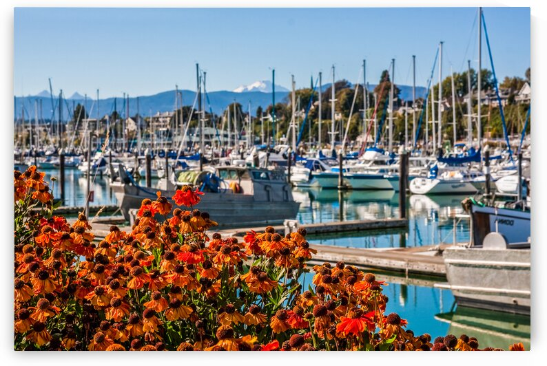 Flowers in Front of Marina and Mountain by Darryl Brooks