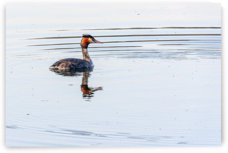The pond life by Luigi Girola