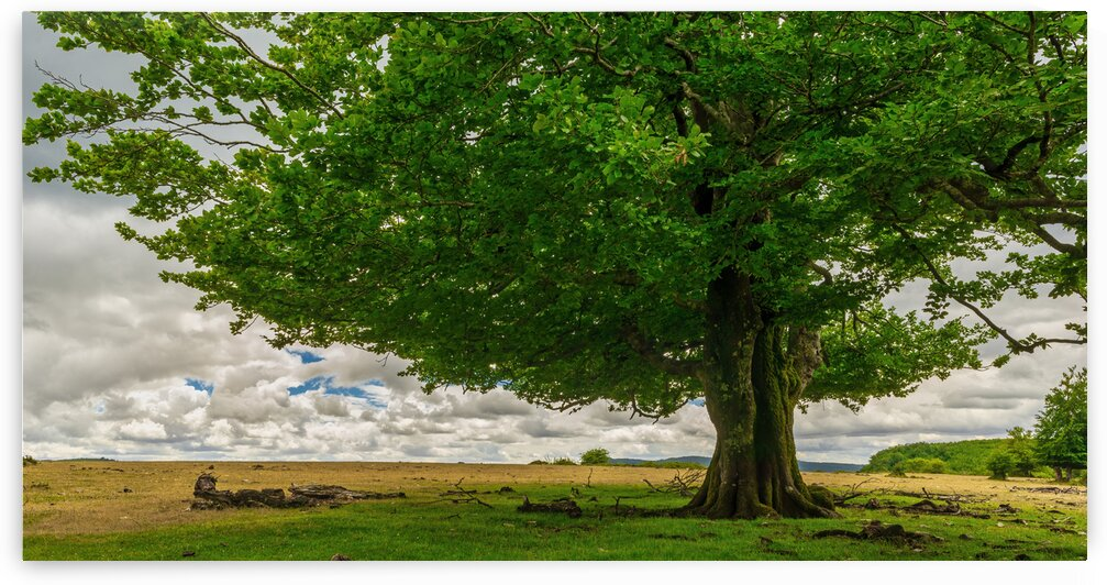 A tree on a cloudy day in Navarra Spain by Vicen photography