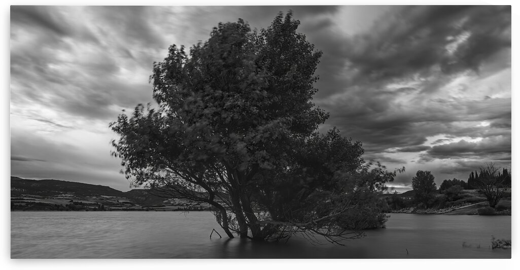 A lonely tree inside the Alloz reservoir in black and white by Vicen photography