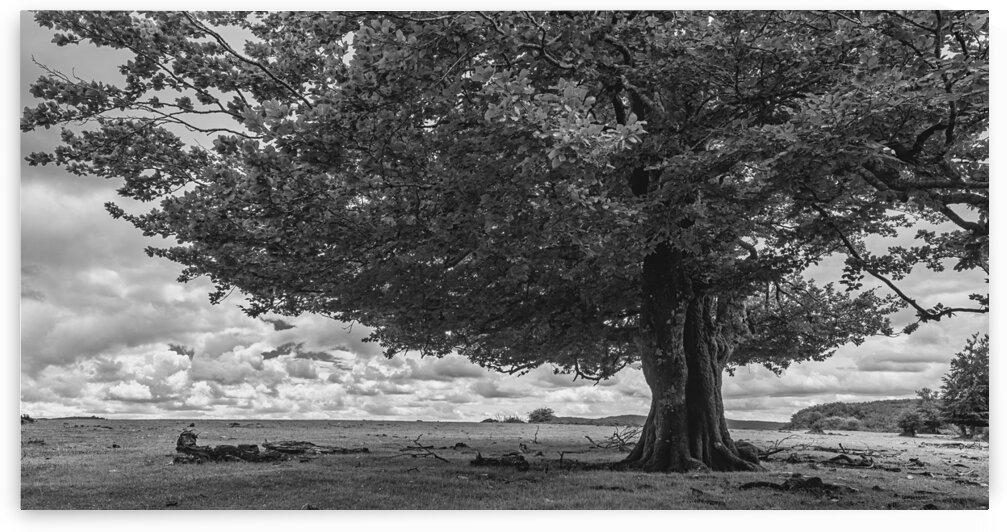 A tree on a cloudy day in black and white Navarra Spain by Vicen photography