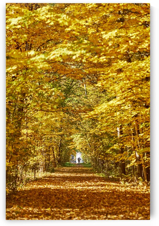 Older man walking to the end of path through forest Knowlton Quebec Canada by Atelier Knox