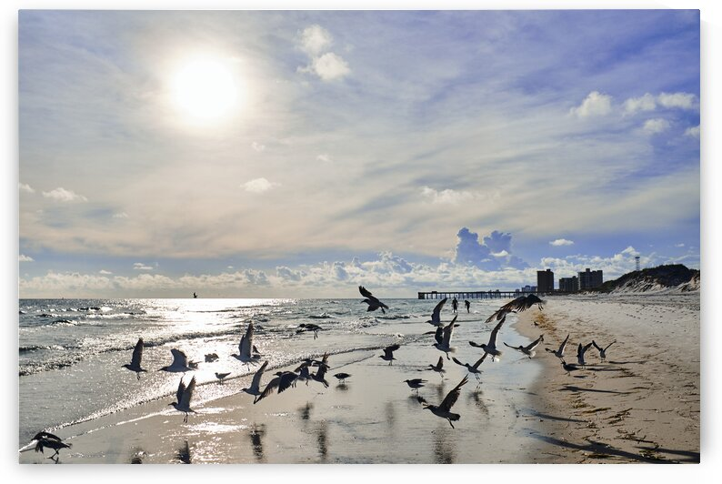 Silhouette of birds taking off on beach with pier behind Saint Andrews state park Florida USA by Atelier Knox