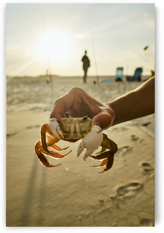 Vacationer catching crab by hand on beach Holding crab on beach on Panama city beach Florida USA by Atelier Knox