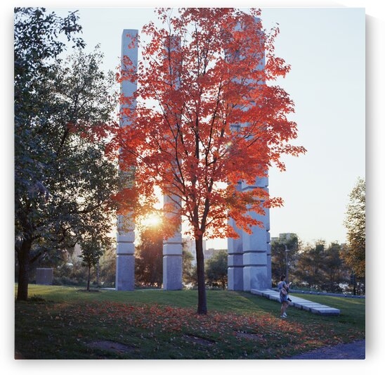 Tree with bright red leaves and sunset behind Montreal Quebec Canada by Atelier Knox