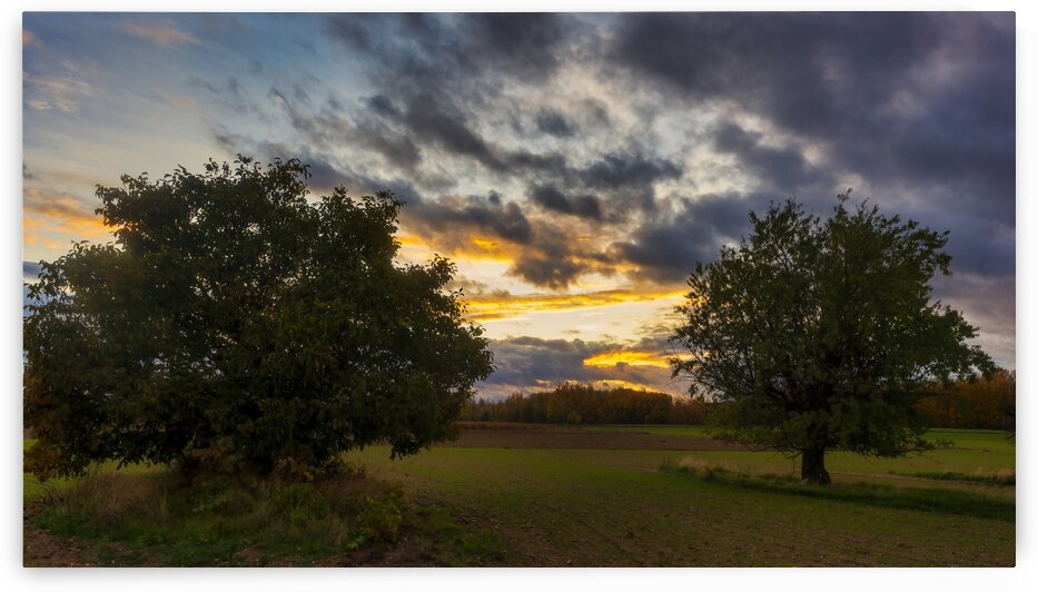 Sunset in the field with two trees on a cloudy day by Vicen photography