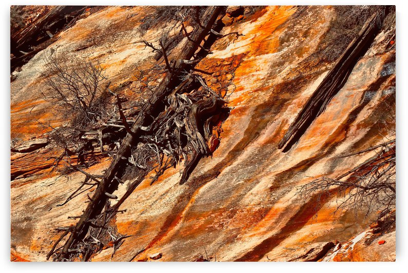 Beauty in Death ... Zion National Park  Utah by Fred J Bivetto