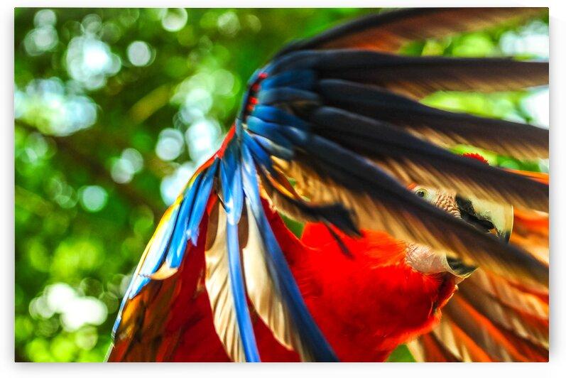 Taking Flight by ScottBrownPhoto