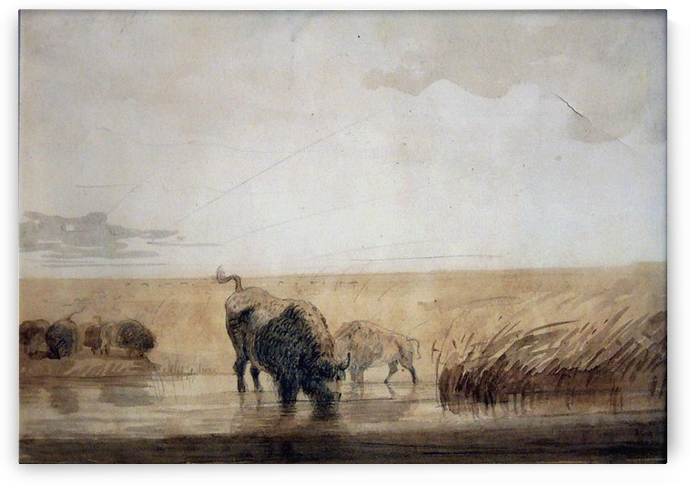 Buffalo watering by Alfred Jacob Miller