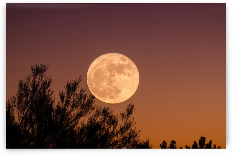 Harvest Moon by 5280Images