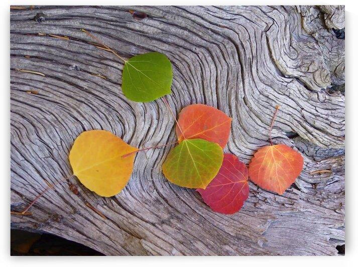 leaves Kenosha by 5280Images