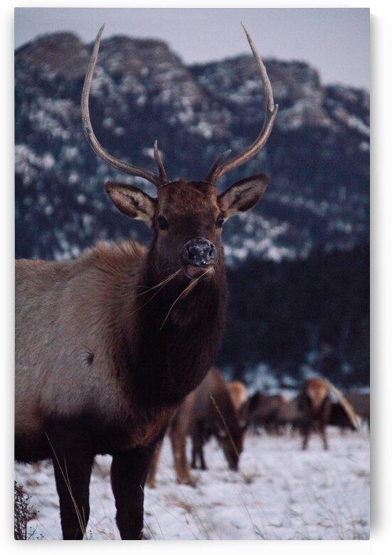 Mule deer by 5280Images