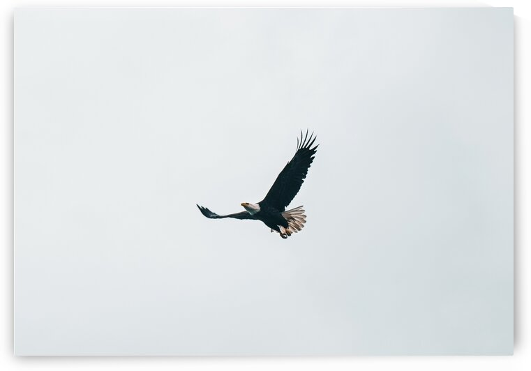 Soaring Eagle by 5280Images