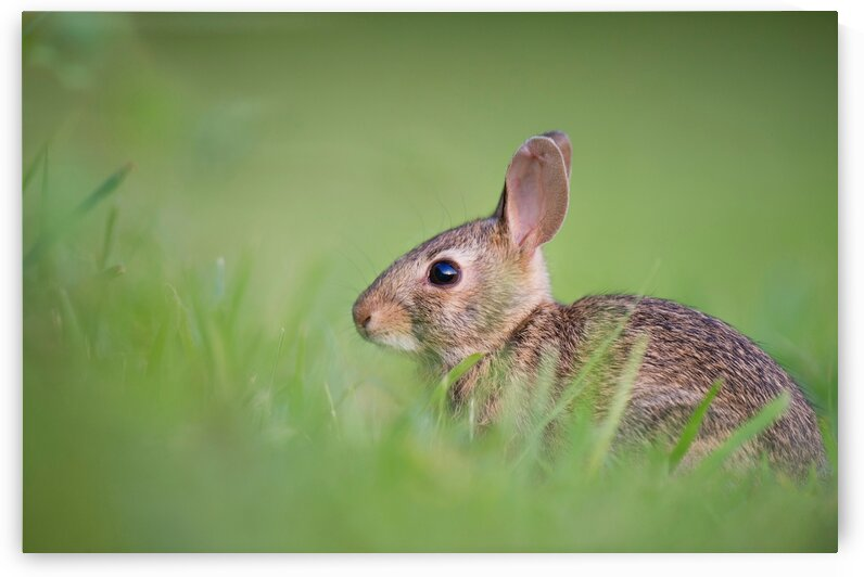 Rabbit in the Park by 5280Images