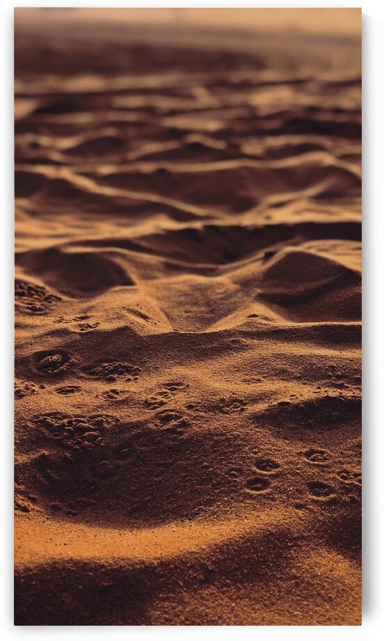 Sand Tracks by 5280Images