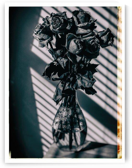 The roses by Jean-Francois Dupuis  by Jean-Francois Dupuis