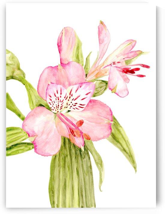 Pink watercolor alstroemeria by blursbyai