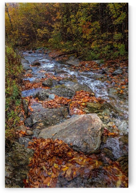 Leaf Filled Creek by Nicholas