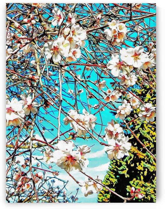 Almond Blossom Time by Dorothy Berry-Lound