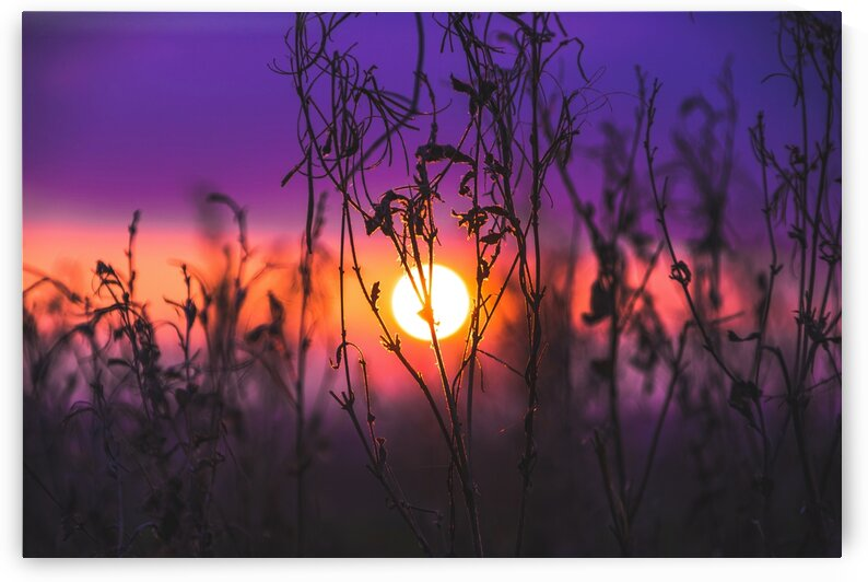 Sunset through the brush by 5280Images