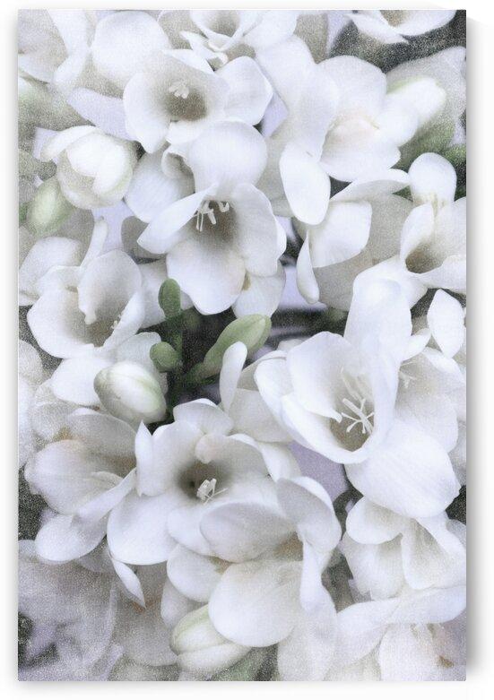 White vintage freesias 2 by blursbyai