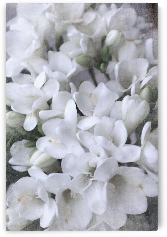White vintage freesias 1 by blursbyai