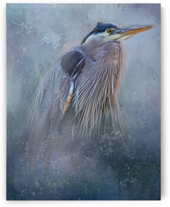 Blue Heron Portrait by HH Photography of Florida