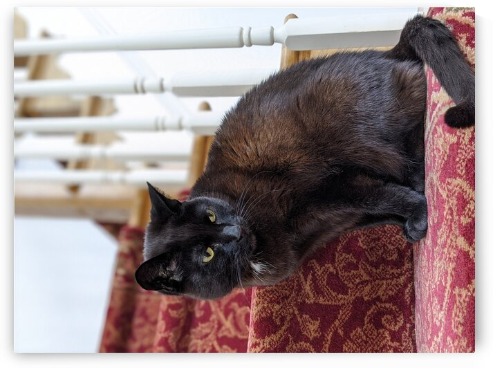 Cat sitting on a staircase by Michael Geyer