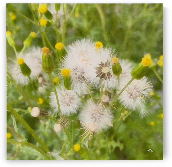 DREAMY WEEDS By:Zo® by Maria Desnoyers Art Print Collection By:Zo