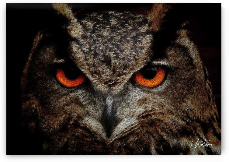 Owl  by Watani Griffith