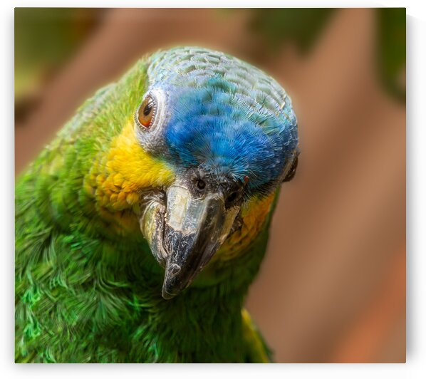 Parrot by Jane Dobbs