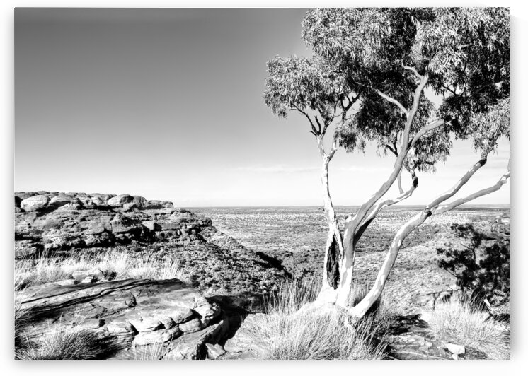 Ghost Gum on Kings Canyon - BW by Lexa Harpell