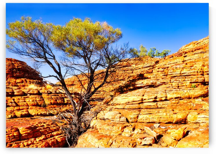 Twisted Tree in the Rocks - Kings Canyon by Lexa Harpell