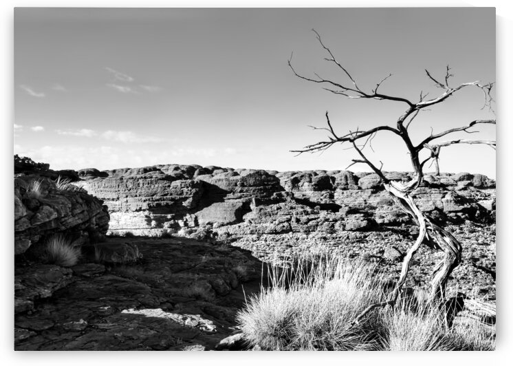 Bare Tree - Kings Canyon BW by Lexa Harpell