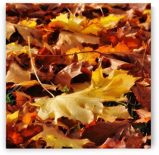 Autumn Leaves by Geoff Weeks
