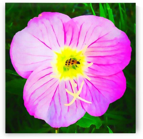 lady bug flower by Pierce Anderson