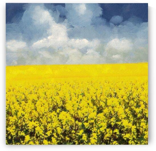Canola Fields  Grampians by Steven Sandner