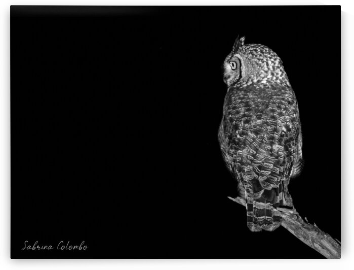 Spotted Eagle OWL Black and White by Sabrina Colombo