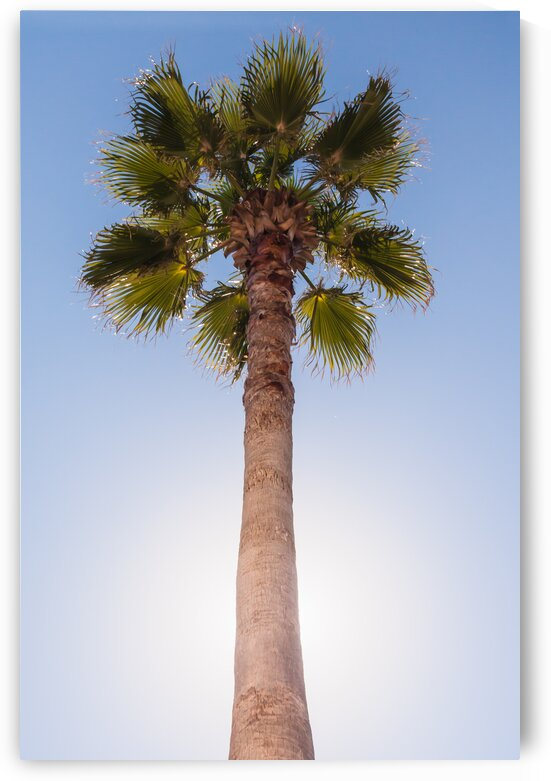 Palm in the Sun by bj clayden photography