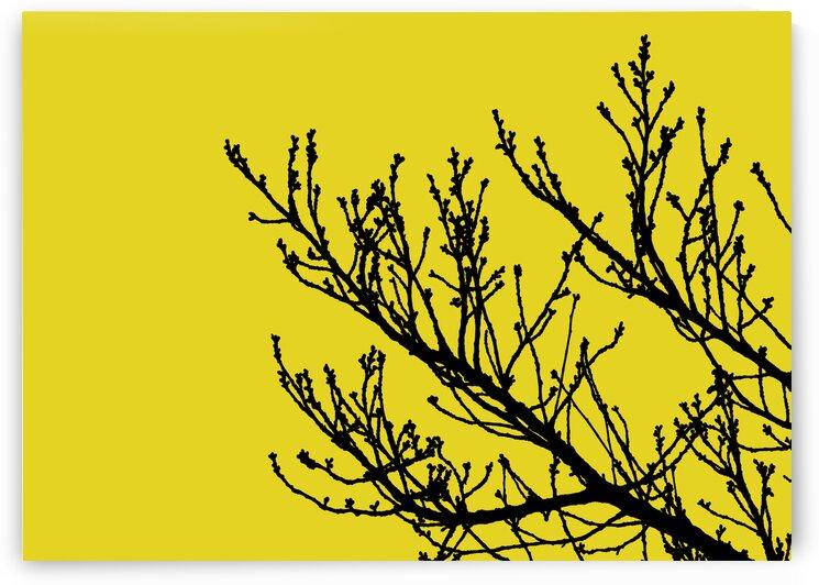 Nature - XLII by Carlos Wood